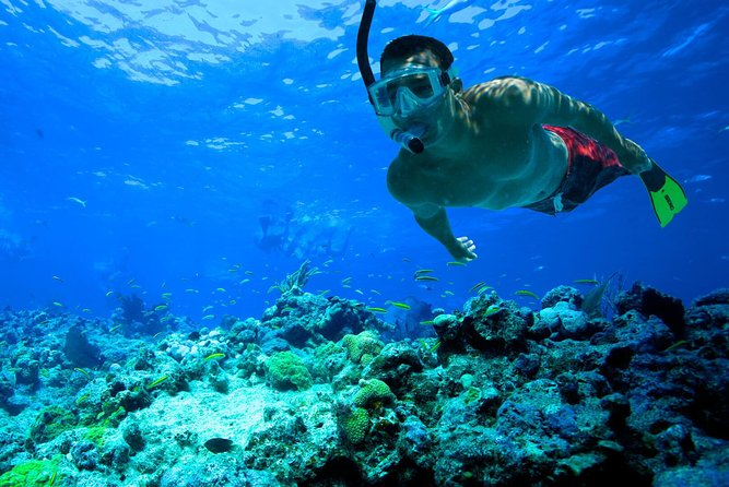Snorkeling Paddleboarding or Kayaking Guided Experience