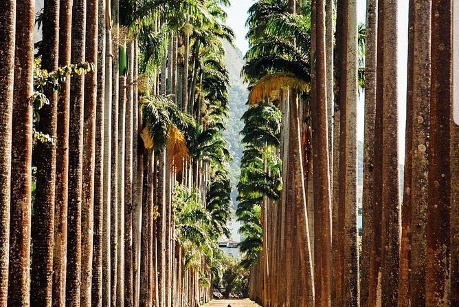 Nature of Rio