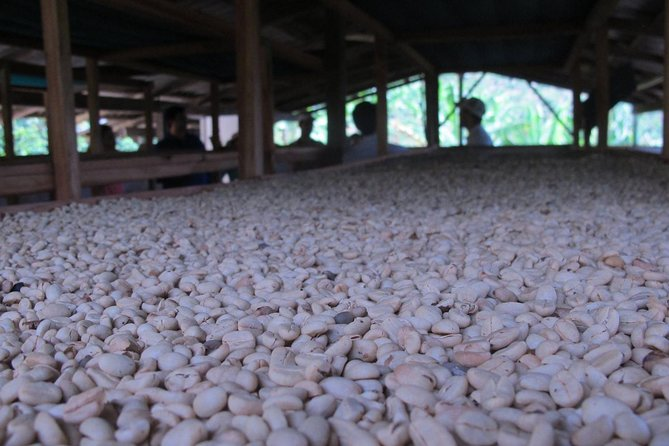 Special Coffee: A Journey from the Seed to the Cup