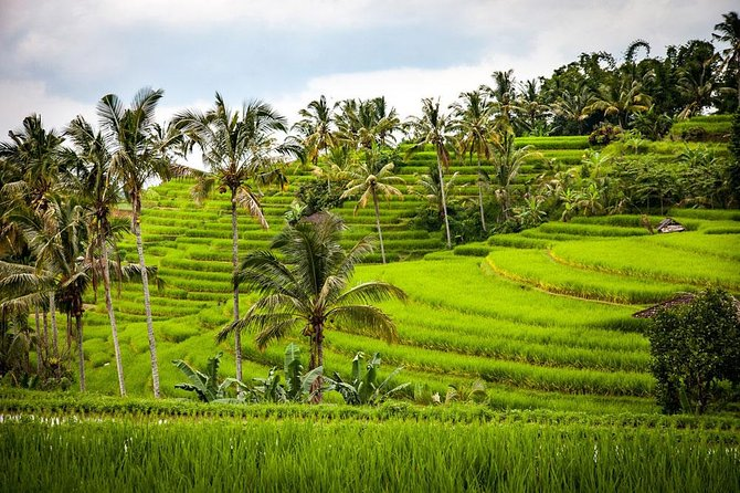 Bali Cheap Tour Packages 3 Days