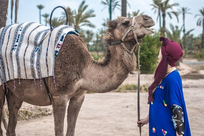 Marrakech camel ride in the Oasis Palmeraie