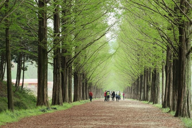 ❃(Free meal !) Nami Island & Petite France & Garden of Morning Calm One-Day Tour