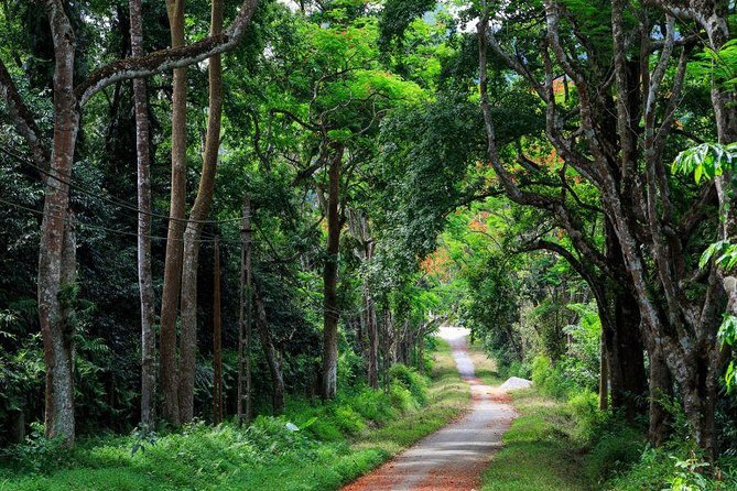 Cuc Phuong National Park 1 Day Tour From Hanoi