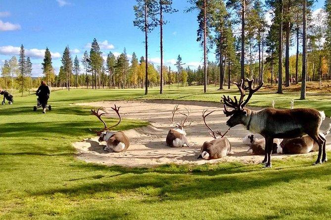 Golf Tour In Lapland