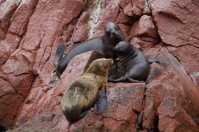 Peru South 2 days Visit Paracas Ica and Nazca