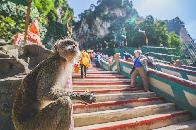 Tour privado Kuala Gandah: experiencia en el santuario de elefantes con almuerzo