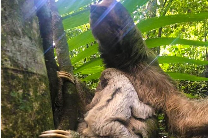 4 In 1 Sloth Water Falls Rain Forest Volcanoes