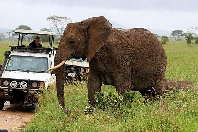Amboseli National Park Guided Full Day Tour photo 7