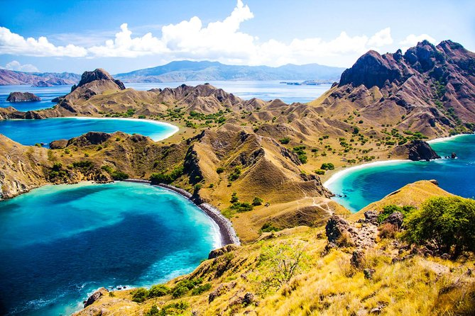 1- day Komodo island Tour hopping around by Speed Boat