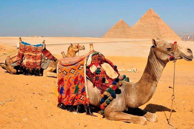 Giza Pyramids & Egyptian Museum Tour