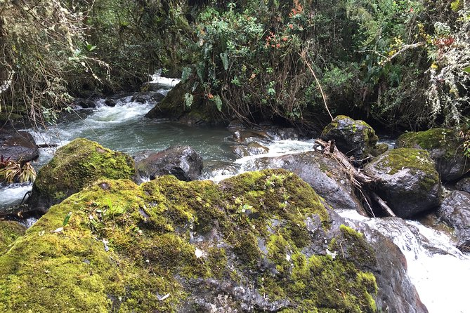 Papallacta Hot Springs & Relax Full Day Tour from Quito