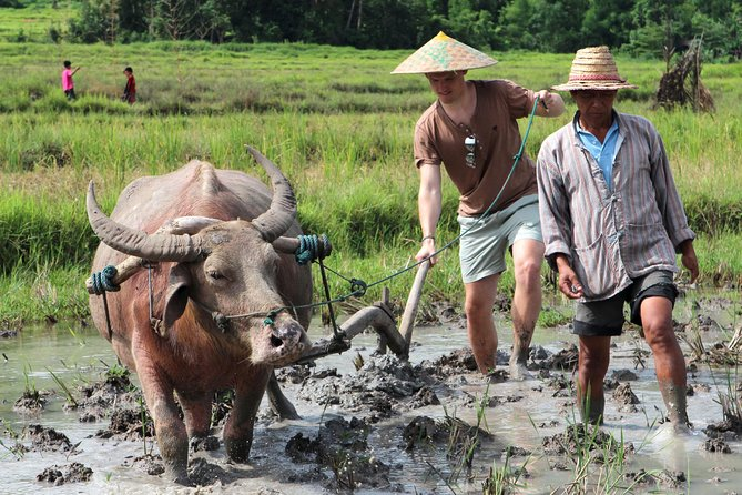Private Half Day Luang Prabang Rural Farm Experience with Lunch