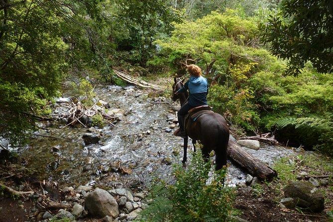 Horseback riding Pucon