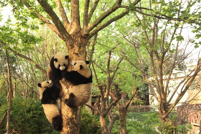 Private Day Tour: Visit Giant Pandas and Discover Shu Culture in Chengdu photo 4