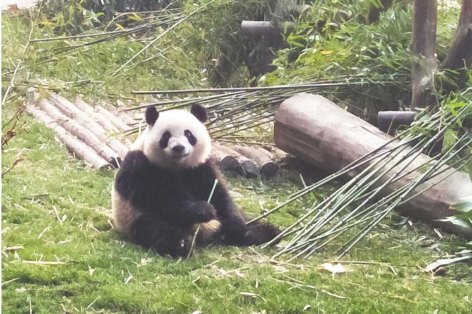 Private Day Tour: Visit Giant Pandas and Discover Shu Culture in Chengdu photo 7