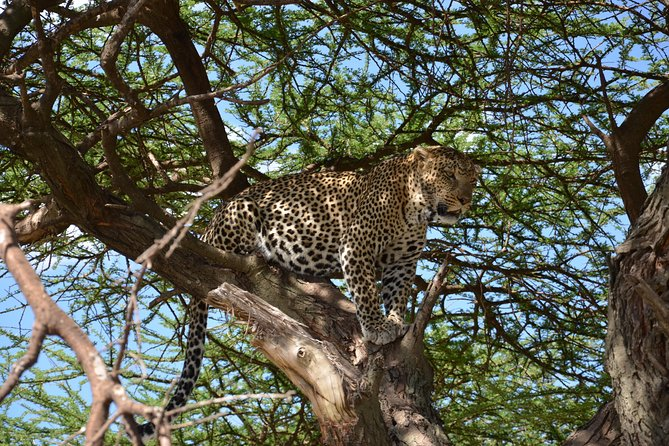 Safari in Tanzania National Parcks photo 2