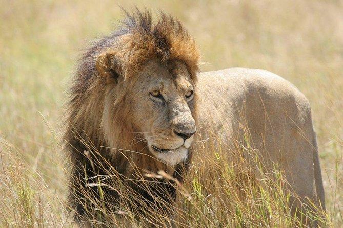 2 Days Tanzania Budget Safari
