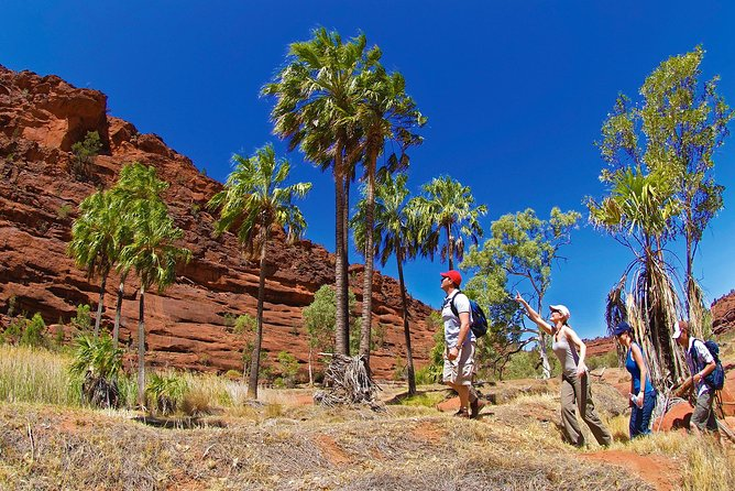Palm Valley 4WD Tour from Alice Springs photo 1