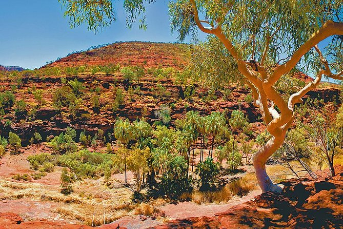 Palm Valley 4WD Tour from Alice Springs photo 6