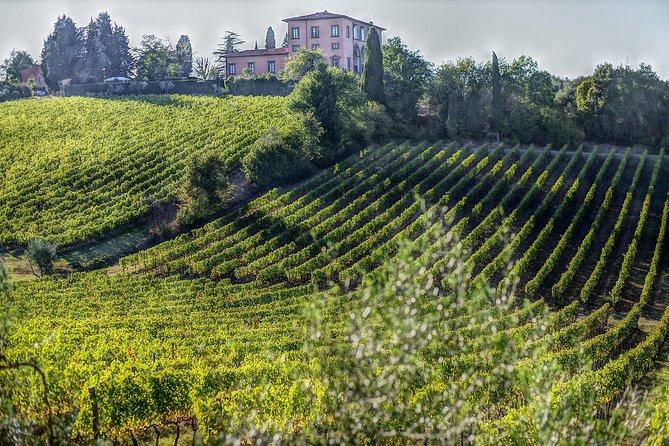 Bolgheri full day, land of Super Tuscan wines