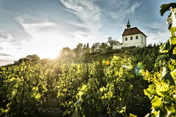 Hidden Vineyards and Private Winery Tour in Prague