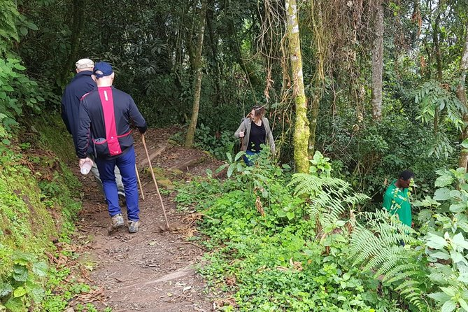 Two-day Nyungwe Canopy and Kivu Lake Adventure photo 7
