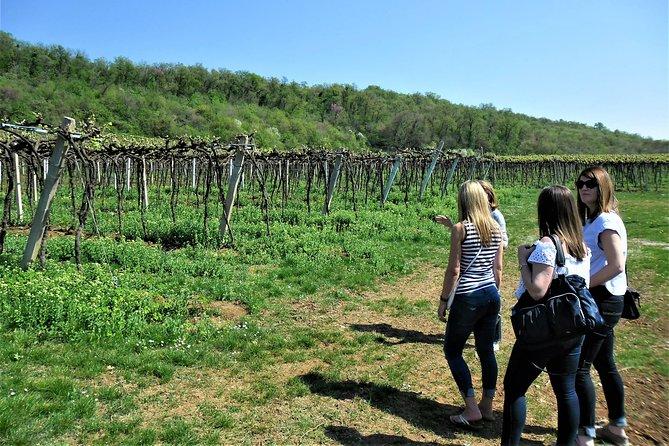 Valpolicella Tour: The land of Amarone