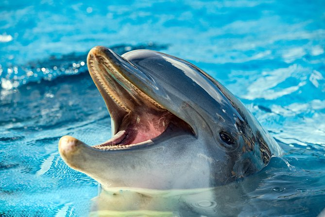 Jet Ski Dolphin Cruise