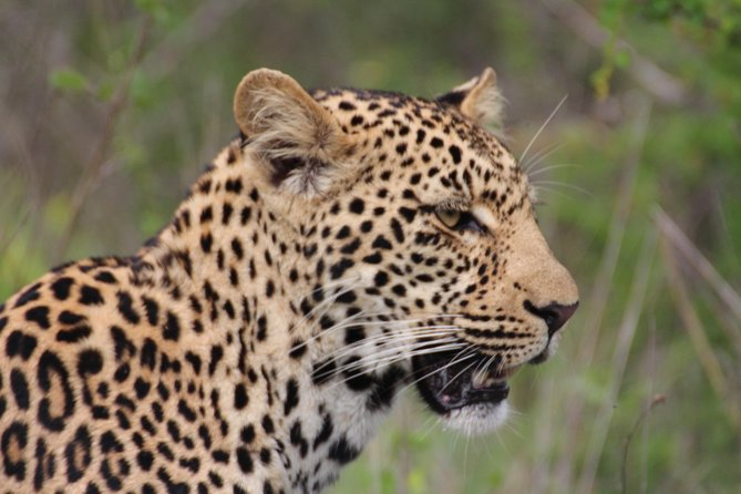 3-Day Essence of the Kruger Park