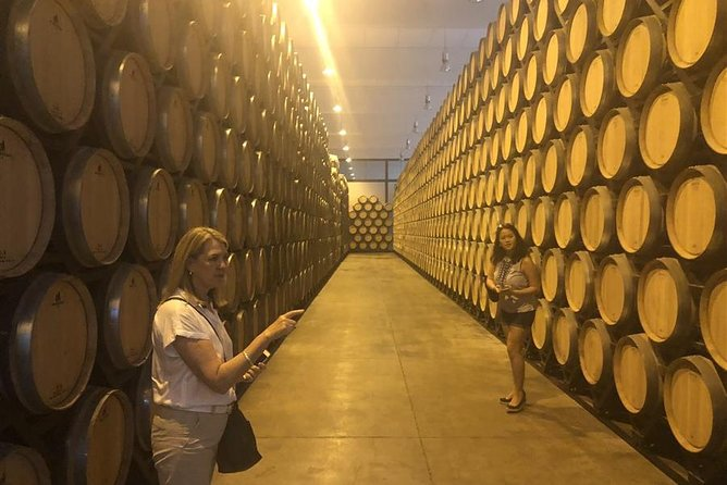 Windmills of Don Quixote Wine Tour from Madrid