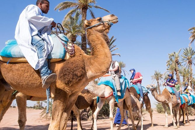 camel ride on the palm grove marrakech