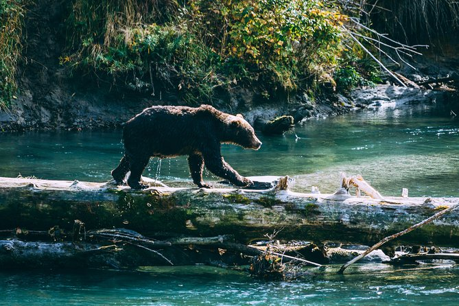 Grizzly Bears of Toba Inlet - 4 Days photo 3