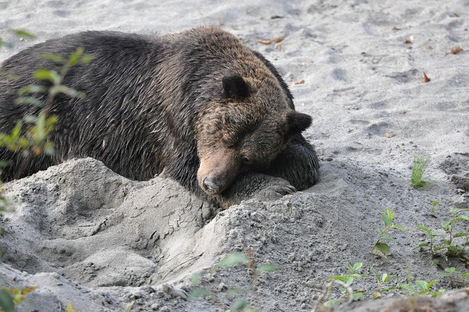 Grizzly Bears of Toba Inlet - 4 Days photo 11