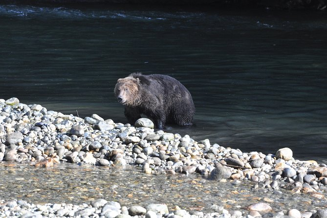 Grizzly Bears of Toba Inlet - 4 Days photo 13