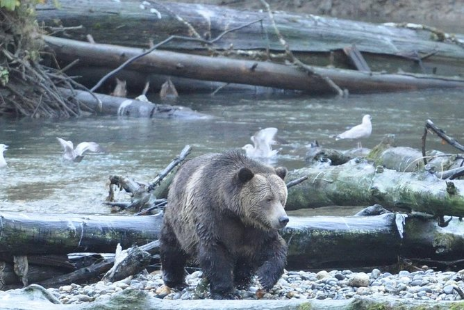 Grizzly Bears of Toba Inlet - 4 Days photo 9