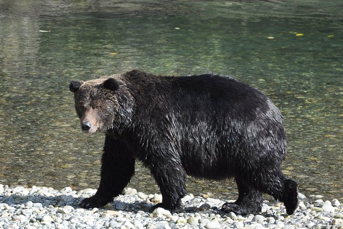 Grizzly Bears of Toba Inlet - 4 Days photo 10