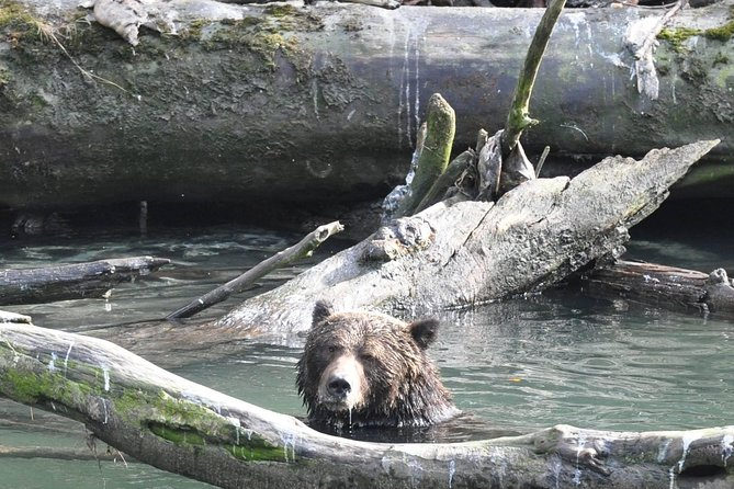 Grizzly Bears of Toba Inlet - 4 Days photo 6