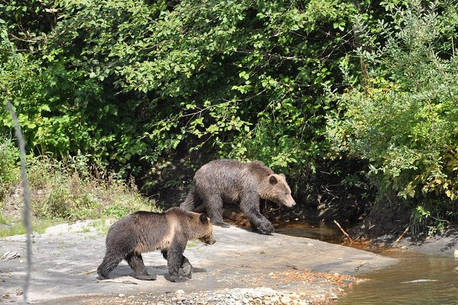 Grizzly Bears of Toba Inlet - 4 Days photo 12