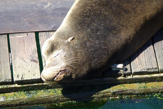 Sea lion on dock in Florence