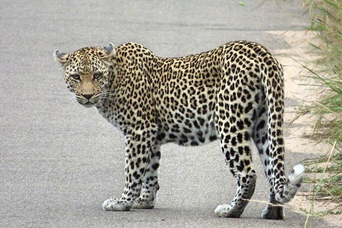 3 Day All Incl. Private Kruger Park Safari with Optional Skukuza Airport P/U photo 1