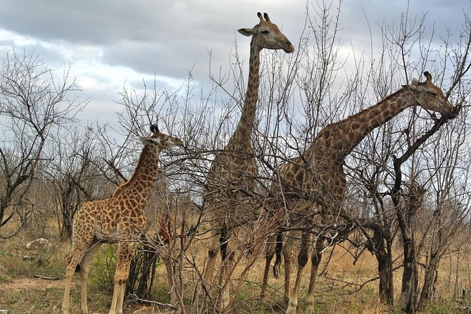 3 Day All Incl. Private Kruger Park Safari with Optional Skukuza Airport P/U photo 4