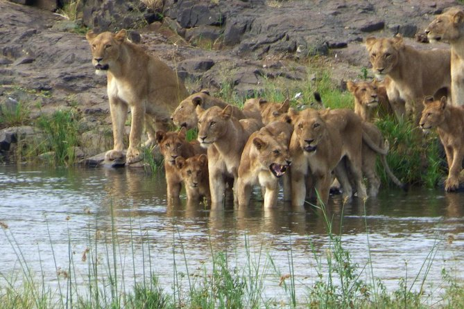 3 Day All Incl. Private Kruger Park Safari with Optional Skukuza Airport P/U photo 2