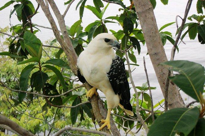Observação de aves no lago Janauary