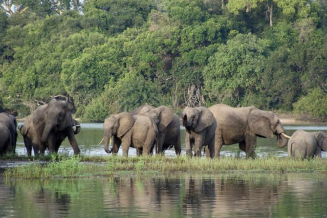 3 Day Safari tour to Selous Game Reserve from Dar es salaam