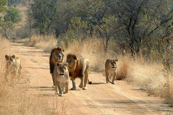 3-Day Safari to Mikumi National Park from Dar-Es-Salaam
