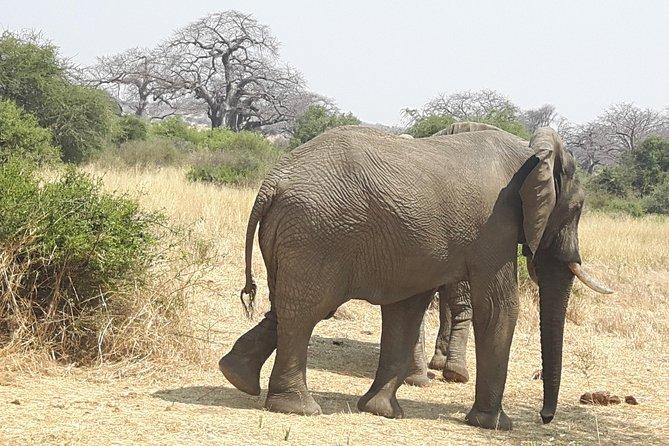 Selous Game Reserve, Mikumi And Ruaha National Park, Udzungwa Mountain 10 Days