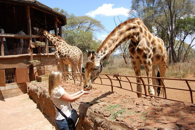 Discover kenya the wildlife paradise in 13 days