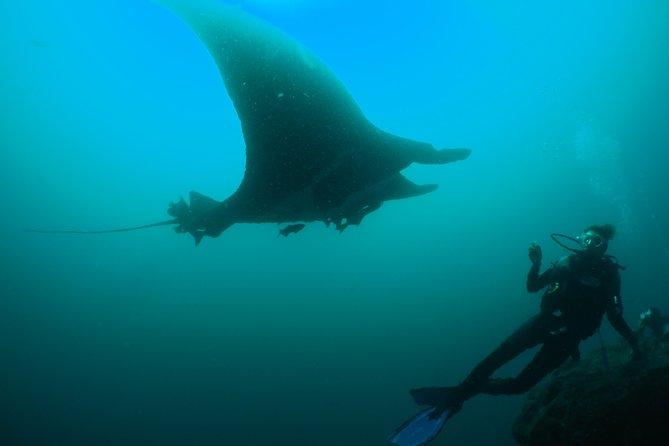 6日間のガラパゴス諸島アドベンチャー:ダイビング、ハイキング、シュノーケリング