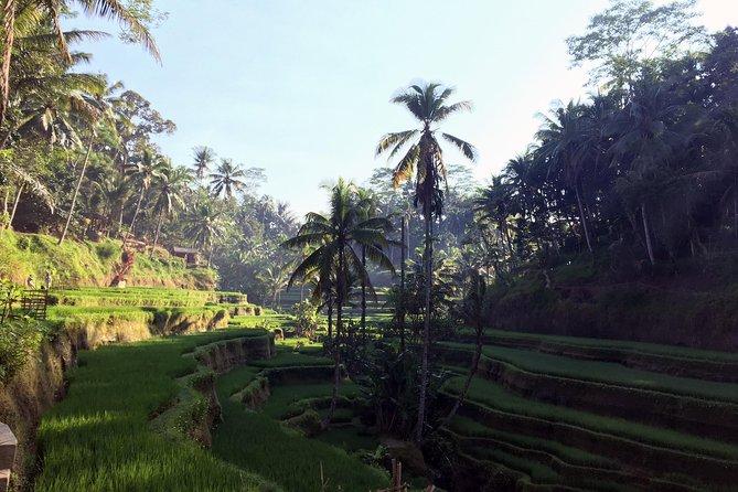 Mount Batur Trekking, Coffee & Rice Terrace Tour