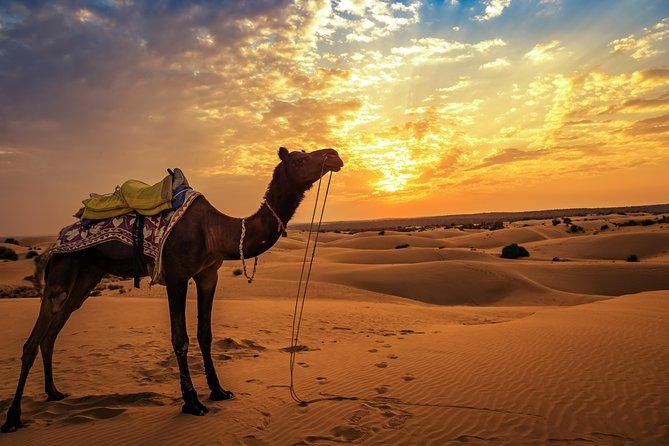 Private Jaisalmer Camel Safari with dinner